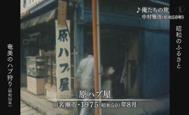 1975年:「奄美大島の夏」ハブ狩り