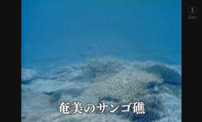 1978年:龍郷湾、奄美のサンゴ礁