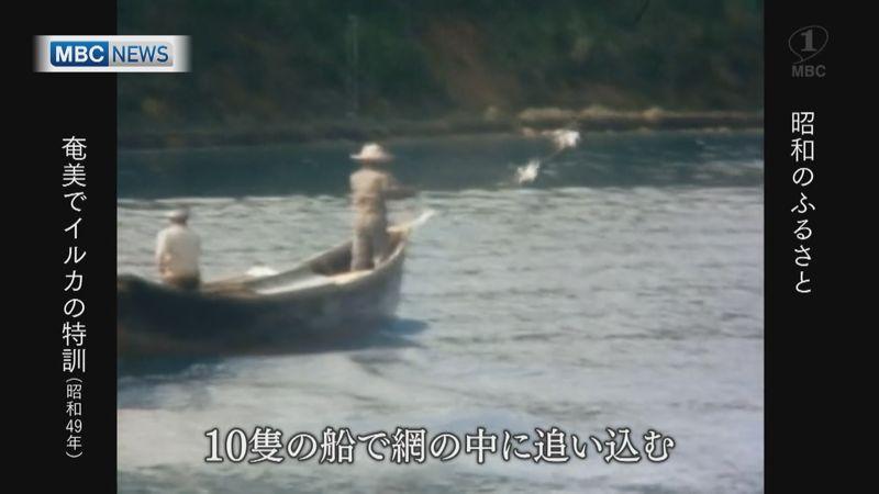 1974年:「沖縄海洋博」に奄美のイルカ。捕獲~訓練の様子