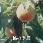 1978年:桃の季節、奄美のスモモ