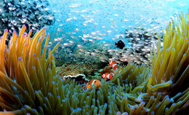 季節ごとの誘惑の海洋生物
