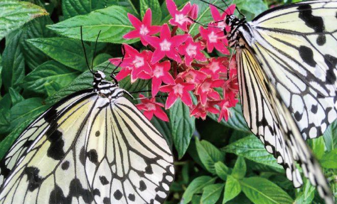 ふわふわ、ひらり。「フルフラガーデン」で、南国の美 しい蝶と過ごすひと時
