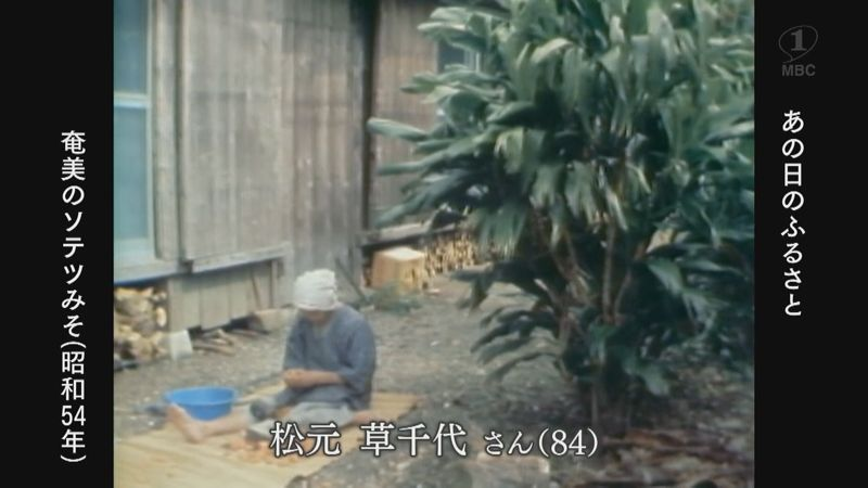 1979年:龍郷町で奄美に伝わるソテツみそ作り