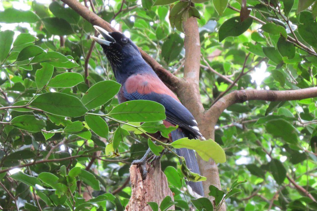 奄美の冬は、野鳥観察にはもってこいの季節です!