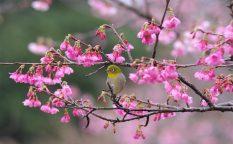 奄美大島南部・高知山展望台で「絶景」を堪能!1-2月はヒカンザクラのお花見も♪