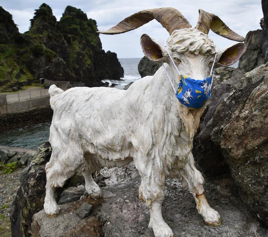 南海日日新聞〔写真〕マスクを着けて道行く人々を励ます山羊=24日、奄美市名瀬