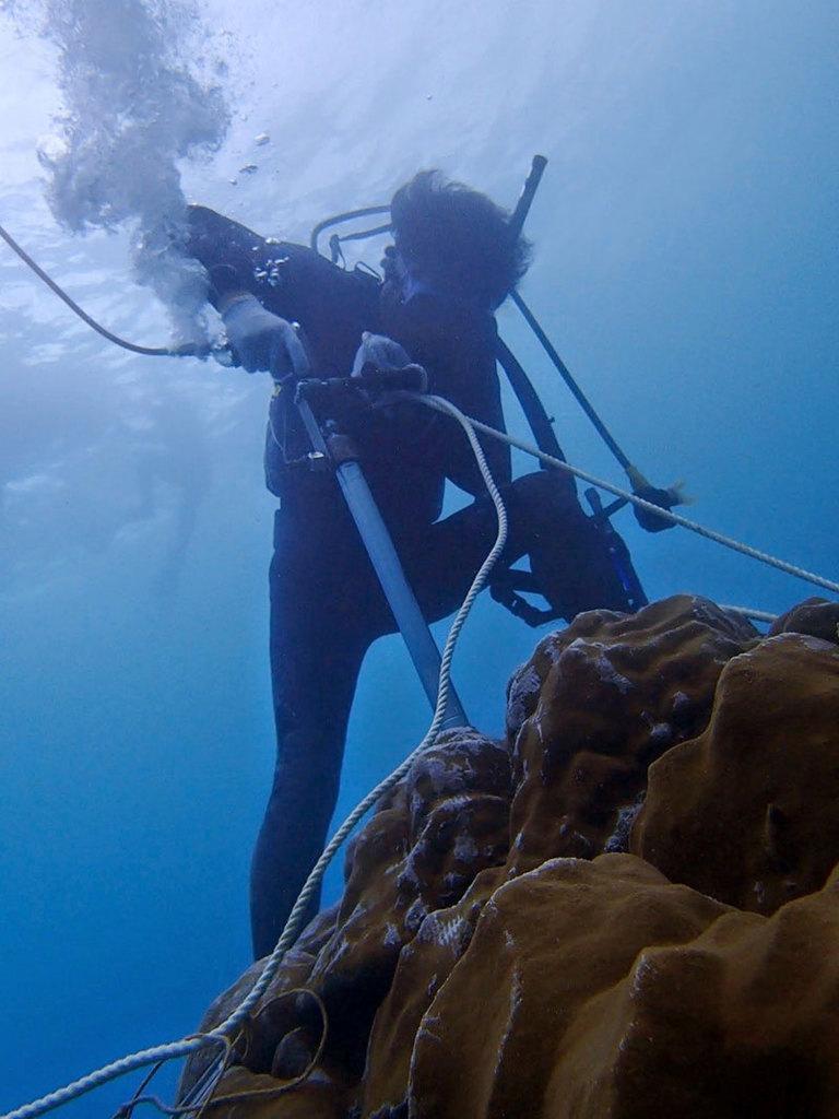 南海日日新聞〔写真〕住用湾でサンゴを採取する研究グループ(提供写真)