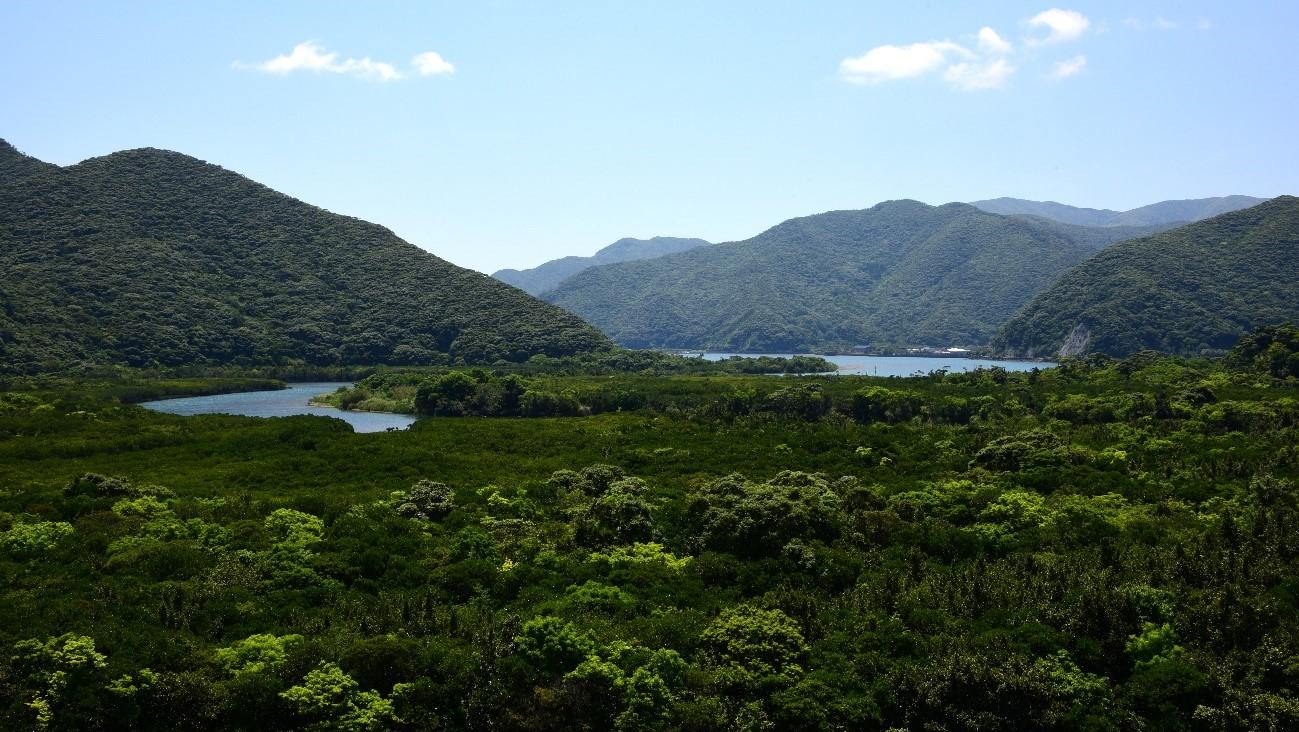 南海日日新聞〔写真〕国道58号から望むマングローブの森=1日、奄美市住用町