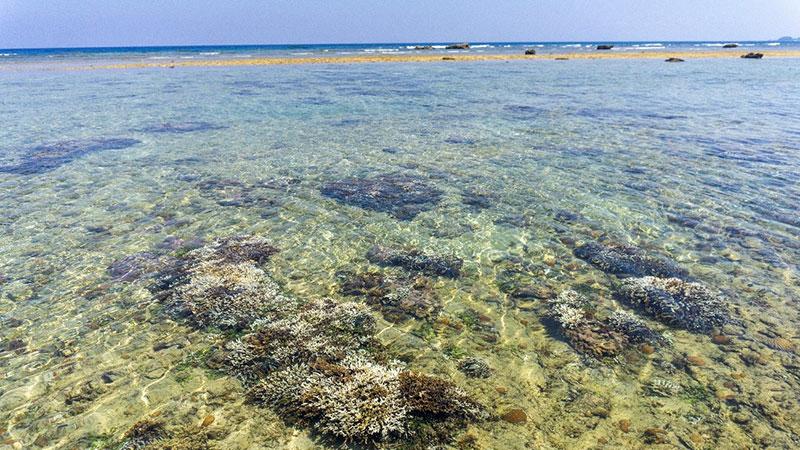 〔写真〕白化が確認された用海岸のサンゴ=18日、奄美市笠利町(濱田康作さん撮影)