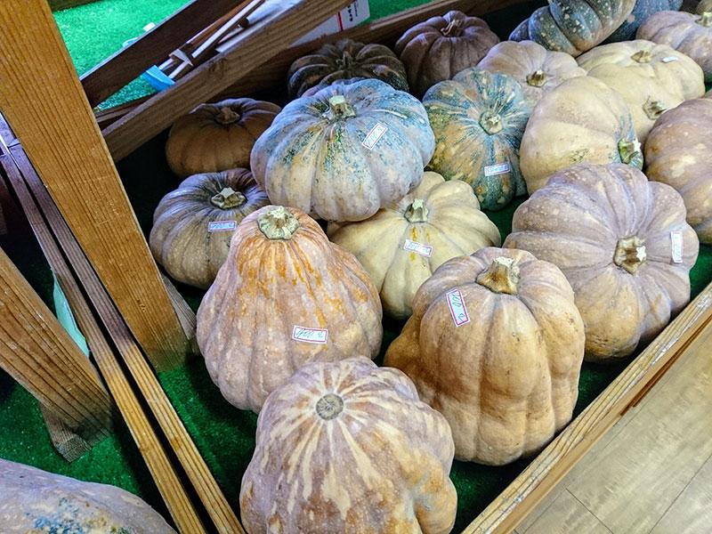 たくさんのトッツプル(かぼちゃ)