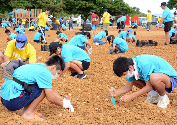 南海日日新聞〔写真〕ギネス世界記録「1時間に植えた花の球根の最多数」に挑戦する参加者ら=18日、和泊町
