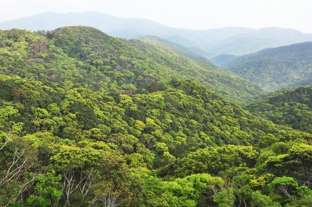 南海日日新聞〔写真〕豊かな生態系を育む照葉樹の森=奄美大島