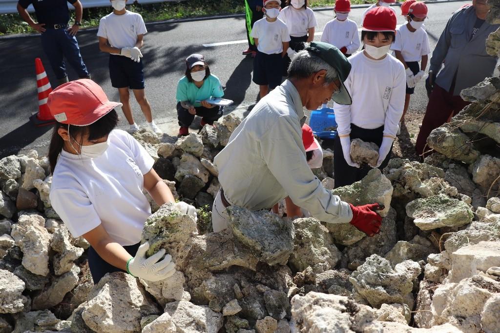 南海日日新聞〔写真〕保存会の指導で石垣を修復する早町小の児童ら=14日、喜界町阿伝集落