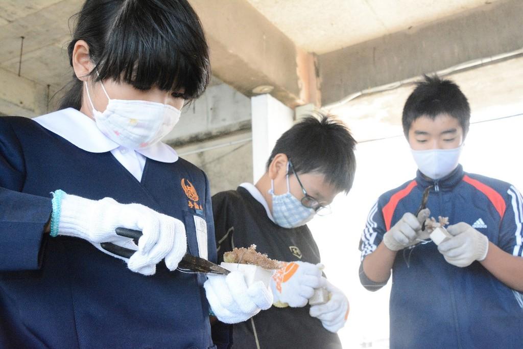 南海日日新聞〔写真〕針金を使い、サンゴの苗を専用の基盤材に取り付ける児童=12日、与論町