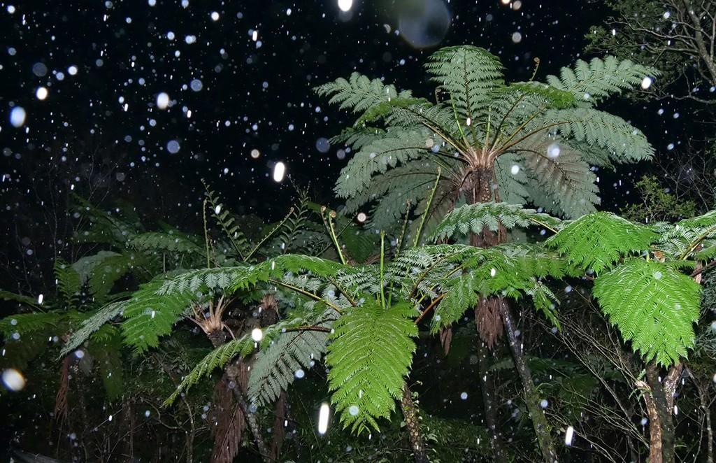 南海日日新聞〔写真〕湯湾岳に舞う雪=9日午前6時16分ごろ、奄美大島(浜田太さん撮影)