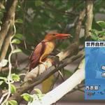 奄美世界遺産審査 7月16日からオンライン開催
